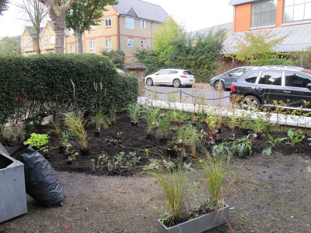 Three tonnes of top soil go in, along with a ready beech hedge and a huge range of perrenials I had collected and grown.